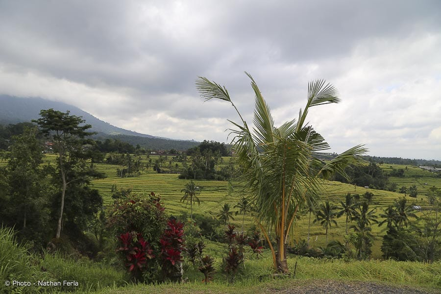 IMG 2437 - Bali