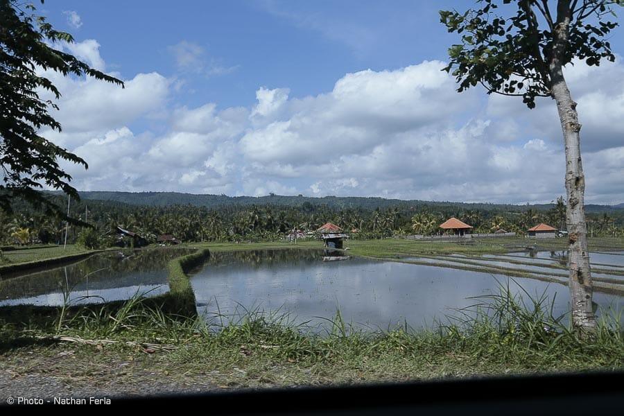 MG 3520 - Bali